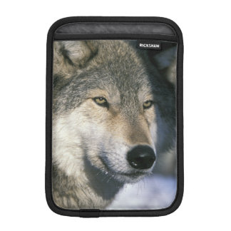 North America, USA, Minnesota. Wolf Canis 3 Sleeve For iPad Mini