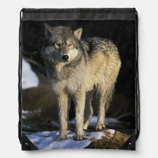North America, USA, Minnesota. Wolf (Canis Drawstring Bag