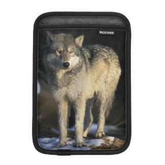 North America, USA, Minnesota. Wolf (Canis Sleeve For iPad Mini