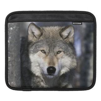 North America, USA, Minnesota. Wolf Canis Sleeve For iPads