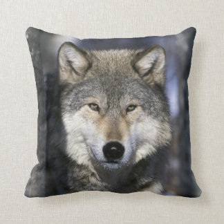 North America, USA, Minnesota. Wolf Canis Throw Pillow