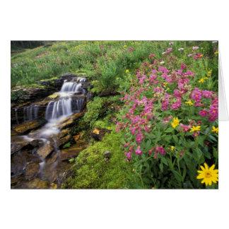 North America, USA, Montana, Glacier National 4 Card