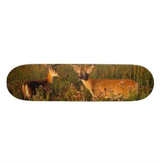 North America, USA, Montana, National Bison Custom Skate Board