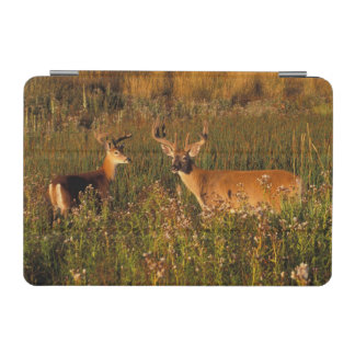 North America, USA, Montana, National Bison iPad Mini Cover