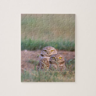 North America, USA, Oregon. Burrowing Owls 2 Jigsaw Puzzle