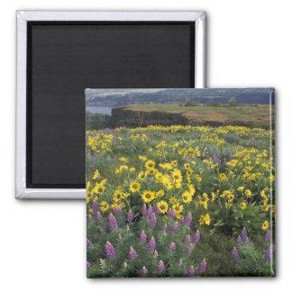 North America, USA, Oregon, Columbia River 2 Square Magnet