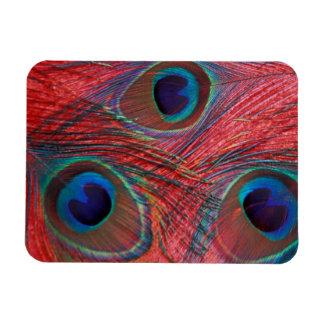 North America, USA, WA, Redmond, Peacock Rectangular Photo Magnet