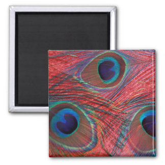 North America, USA, WA, Redmond, Peacock Square Magnet