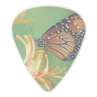 North America, USA, WA, Seattle, Woodland Park 2 Acetal Guitar Pick