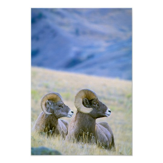 North America, USA, Wyoming, Yellowstone Poster