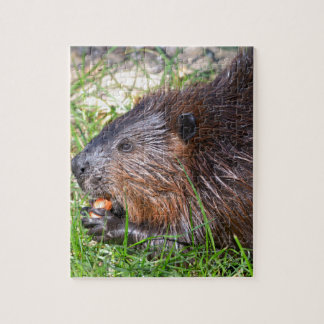 North American Beaver eating vegetable Jigsaw Puzzle