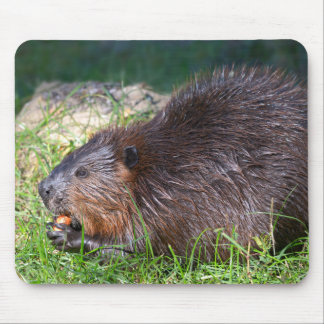 North American Beaver eating vegetable Mouse Pad