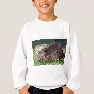 North American Beaver eating vegetable Sweatshirt