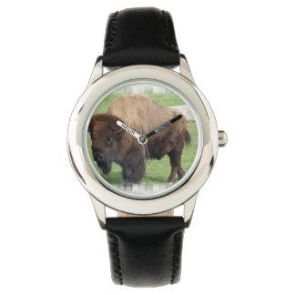 North American Buffalo Watch