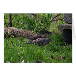 North American Mourning Doves Card