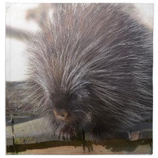 North American porcupine Napkin