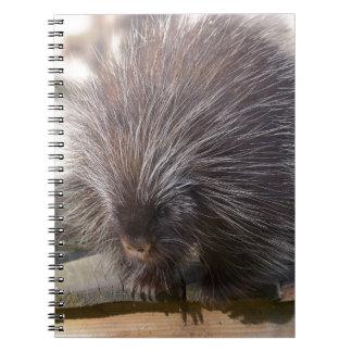 North American porcupine Notebooks