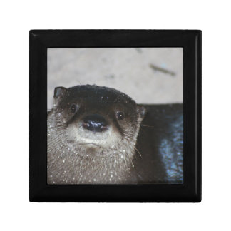 North American River Otter Keepsake Box