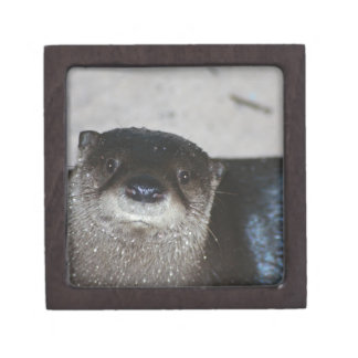 North American River Otter Premium Gift Box