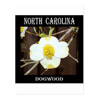 North Carolina Dogwood Postcard