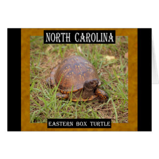 North Carolina Eastern Box Turtle (NC, TN) Card