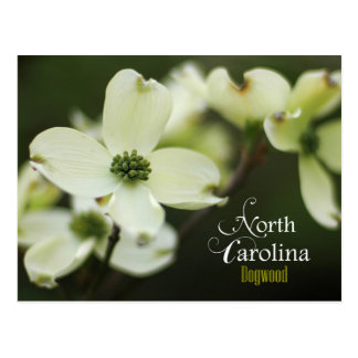 North Carolina State Flower: Flowering Dogwood Postcard