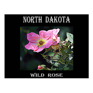 North Dakota Wild Rose Postcard