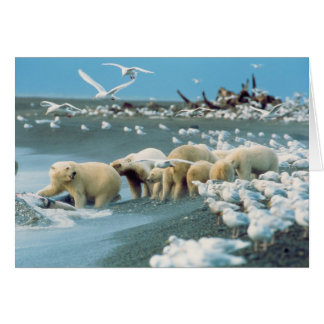 North Slope, Alaska. Polar Bears Ursus Greeting Card