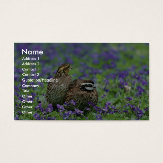 Northern bobwhite quail business card