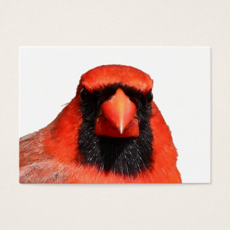 Northern Cardinal Business Card