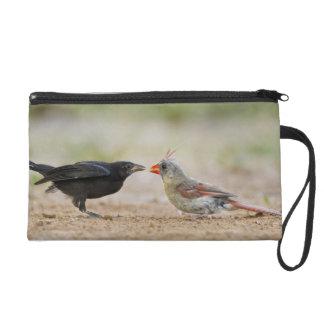 Northern Cardinal feeding baby cowbird Wristlet Purses