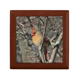 Northern Cardinal Gift Box