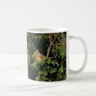 Northern cardinal in cedar tree coffee mug