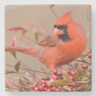 Northern Cardinal in Nandina Heavenly Bamboo Stone Beverage Coaster