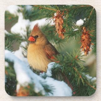 Northern Cardinal in tree, Illinois Coaster
