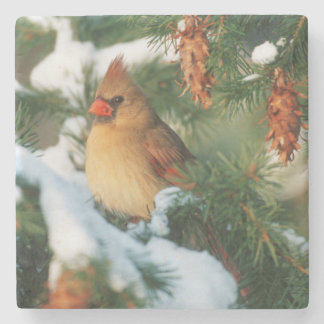 Northern Cardinal in tree, Illinois Stone Coaster