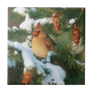 Northern Cardinal in tree, Illinois Tile