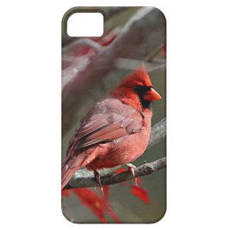 Northern cardinal iPhone 5 case