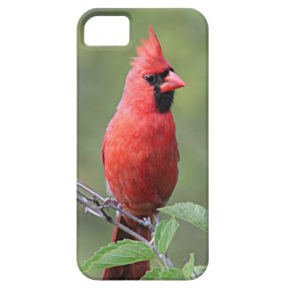 Northern cardinal iPhone 5 cases