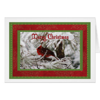 Northern Cardinal Male Christmas Card