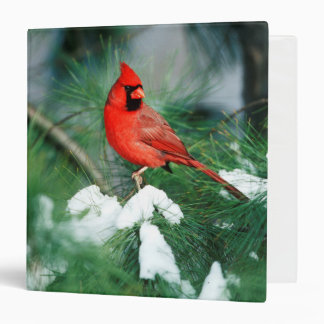 Northern Cardinal male on tree, IL 3 Ring Binder