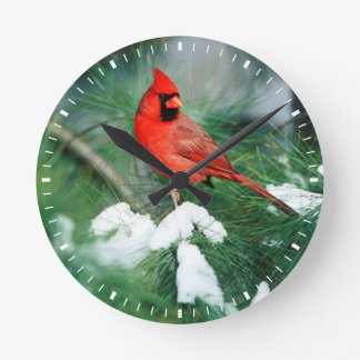 Northern Cardinal male on tree, IL Wallclocks