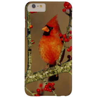 Northern Cardinal male perched, IL Barely There iPhone 6 Plus Case