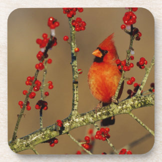 Northern Cardinal male perched, IL Beverage Coasters