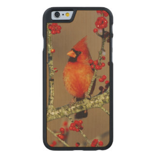 Northern Cardinal male perched, IL Carved® Maple iPhone 6 Slim Case