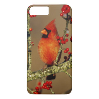 Northern Cardinal male perched, IL iPhone 8 Plus/7 Plus Case