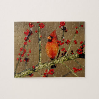 Northern Cardinal male perched, IL Jigsaw Puzzle