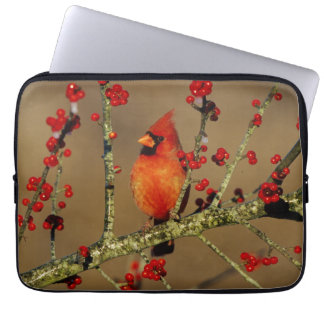 Northern Cardinal male perched, IL Laptop Sleeve