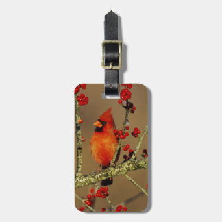 Northern Cardinal male perched, IL Luggage Tag