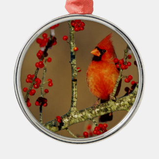 Northern Cardinal male perched, IL Metal Ornament